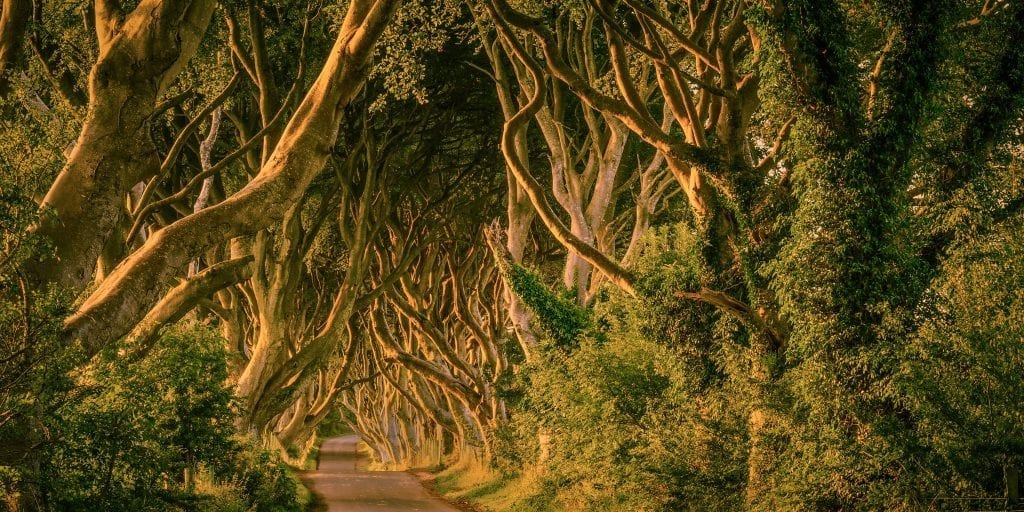The Dark Hedges used during the filming of Game of Thrones
