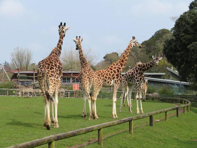 Fota Wildlife Park
